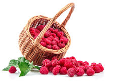 Fresh berries raspberry in wicker basket strewed. With green leaves. On white background Stock Photography
