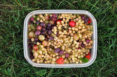 Fresh berries in a rectangular plastic container on grass. Fresh berries: white currant, raspberry, gooseberry, cherry in a rectangular plastic container on Stock Images