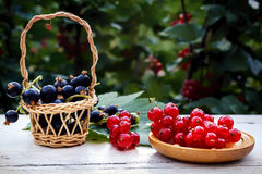 Fresh berries of red and black are coordinated in wooden utensils. Stock Photos