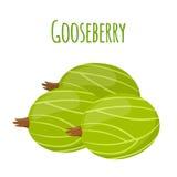 Fresh berries, sweet gooseberry. Vegetarian food. Flat style. Royalty Free Stock Image