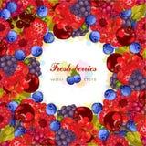 Fresh berries. Vegetarian fresh farm product. Eco, raw, organic, natural. Vector illustration Stock Images