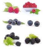 Fresh berry Royalty Free Stock Photos
