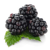 Fresh berry blackberry Stock Images