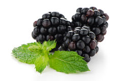 Fresh berry blackberry. With green mint leaves isolated on white background Royalty Free Stock Photos