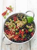 Fresh berry Stock Photography