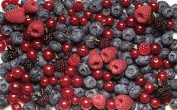 Fresh berry fruit Stock Photos