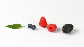 Fresh berry fruit Royalty Free Stock Image