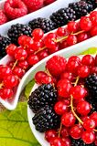 Fresh berry fruits Royalty Free Stock Photos