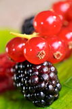 Fresh berry fruits Stock Image