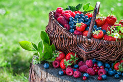 Fresh berry fruits in basket Royalty Free Stock Image