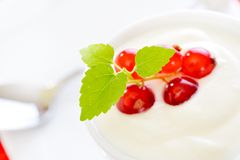 Fresh berry fruits with yogurt Stock Photography