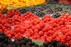 Beautiful raspberry. Stock Image