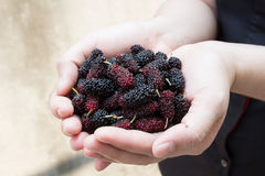 Fresh berry in tropical country in hand Stock Images
