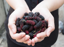 Fresh berry in tropical country in hand Stock Photography