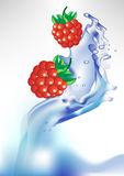 Fresh berry in water splash Royalty Free Stock Images