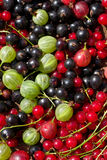 Fresh berrys Stock Images