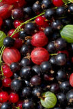 Fresh berrys Stock Photography