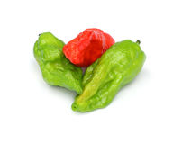 Fresh Bhut Jolokia chili pepper or Naga Morich Stock Images