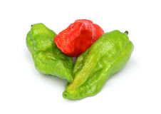 Fresh Bhut Jolokia chili pepper or Naga Morich Royalty Free Stock Photography