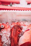Fish in the boxes of ice in the harbor pier in Iceland. Fresh big fish laying in the yellow boxes of the fisherman, just delivered from the boat in ice with blur Royalty Free Stock Image