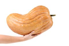 Fresh big pumpkin on a hand. Royalty Free Stock Image