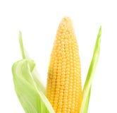 Fresh big raw corncob. Isolated on a white background Stock Photo