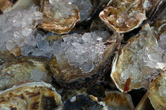 Fresh big raw oysters on ice. Fresh big raw oysters unopen in shells on crushed ice in wooden display box on fish market, close up Stock Photo