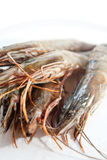 Fresh and big raw tiger prawn Royalty Free Stock Images