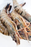 Fresh and big raw tiger prawn Stock Photos