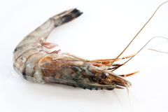 Fresh and big raw tiger prawn Stock Images