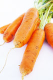Fresh big red carrot Royalty Free Stock Photos