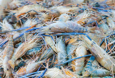 Fresh big shrimp Royalty Free Stock Photos