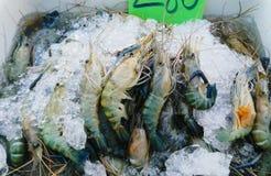 Fresh big shrimps. Royalty Free Stock Image