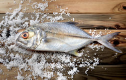 Fresh bigeye trevally fish Stock Images