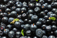 Fresh bilberries background Royalty Free Stock Photography