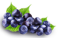 Fresh Bilberries blueberries. Isolated on the white background Stock Photography