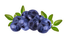 Fresh Bilberries blueberries, isolated. On white background Stock Photography
