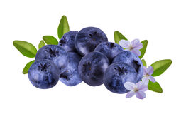 Fresh Bilberries blueberries, isolated. On white background Stock Image