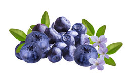 Fresh Bilberries blueberries, isolated. On white background Royalty Free Stock Images