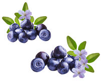 Fresh Bilberries blueberries, isolated. On white background Royalty Free Stock Photos