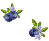 Fresh Bilberries blueberries, isolated. On white background Stock Photo