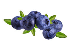 Fresh Bilberries blueberries, isolated on white Royalty Free Stock Photography