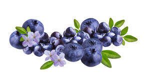Fresh Bilberries blueberries, isolated on white. Background Stock Photography