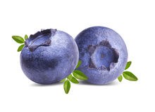 Fresh Bilberries blueberries, isolated on white. Background Royalty Free Stock Image