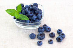 Fresh bilberries in a bowl Stock Image
