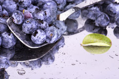 Fresh Bilberries. Close-up background Royalty Free Stock Photography