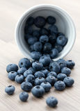 Fresh bilberry Royalty Free Stock Photos