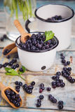 Fresh bilberry in cup Royalty Free Stock Photo