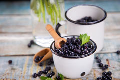 Fresh bilberry in cup Royalty Free Stock Image