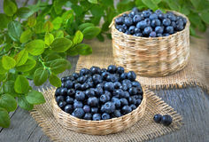 Fresh bilberry Stock Images